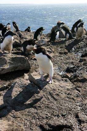 Port Stanley – Falkland Eilanden