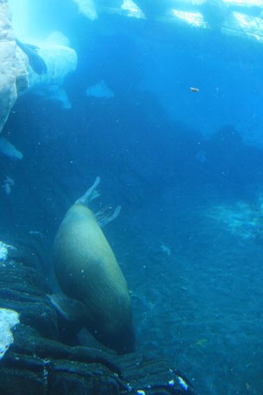 Sea World San Diego.