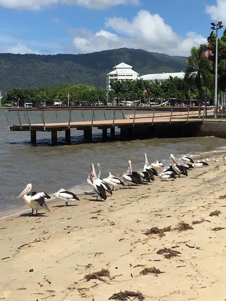 We zijn er! in Cairns, Australië