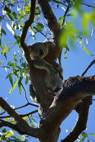Gelukkig nieuwsjaar! Townsville, Australië.