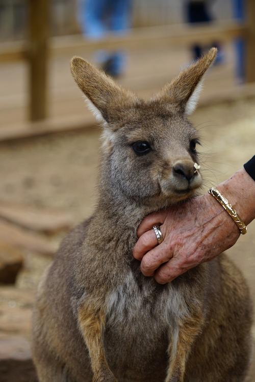 Hobart, Tasmanië | Bijzonder ecosysteem van Australië
