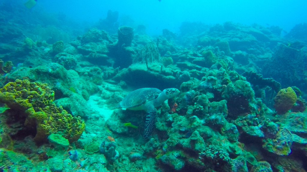 Guadeloupe   Jaques Cousteau National Reserve