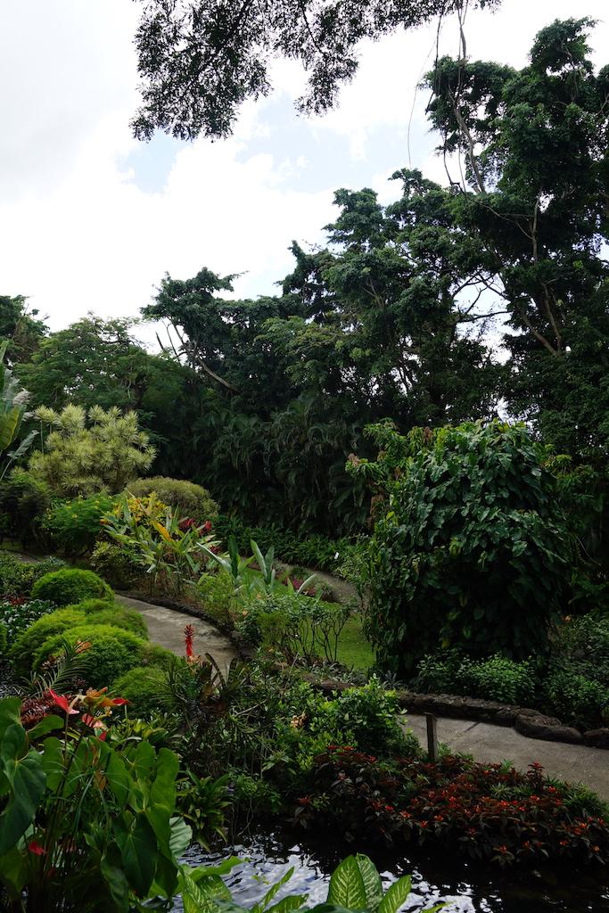 Guadeloupe | Jardin Botanique